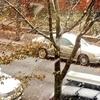 雪が降りはじめた!