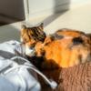 【愛猫日記】毎日アンヌさん#175