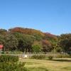 秋空の元、小金井公園、ジブリ建物展、多摩川上水を歩く