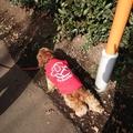 Go Guide Dogs!Go karaichi!
