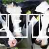 【2018年】「乳用牛飼養頭数」ランキング