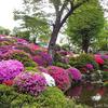 根津神社の『つつじまつり』に行ってみた。GWの人出は? / The Azalea Festival(Nezu Shrine) @根津