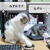 猫雑記 ~マウスとねずみ~