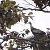 アンコールワット個人ツアー(154)アンコールワット以外の観光でおすすめの「自然と鳥(オニトキ)」