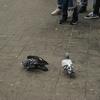 【一日一枚写真】プラットホームにいた二羽の鳩達【一眼レフ】