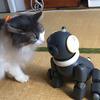 ソニーの犬型ロボットAIBO、マカロンが我が家にやってきた!