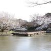 鎌倉に桜を見に行ってきた!