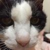 【初投稿】7人の猫侍たちをご紹介!