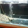 水槽のお掃除と照明敷設