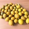 レモンが好きでも、とらないで〜〜