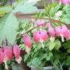 4月26日誕生日の花と花言葉