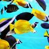 34番「魚」のキーワードは「富」―― ルノルマンカード占い。
