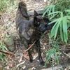 甲斐犬サンの休日の過ごし方(*´罒`*)ニヒヒ