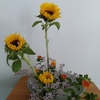 生け花は楽しい