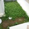 クラピアを植えてもうすぐ1年…刈り取り2回目