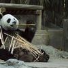 【中国生活】が私に与えた気づきと影響を5つ挙げてみる