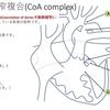 心室中隔欠損+大動脈縮窄+大動脈弁(もしくは弁下)狭窄の複合疾患について CoA complex(大動脈縮窄複合)  今回はCoAについて  疾患28