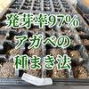 発芽率97%のアガベの種まきの時期と方法[チタノタ・ブルーBB編]