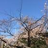 東京の桜・・・九段界隈