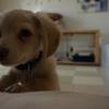 チワックス・犬を飼い始めて約2週間!食欲や睡眠時間、体調の変化や噛んだり吠えたり夜鳴きはした?