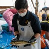 2021年6月7日 小浜漁港 お魚情報