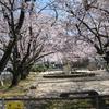 友人達と佐賀市大和町にある築山児童公園に平成最後の花見に行ってきました。