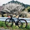 ロードバイク - 朝外練