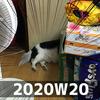 週報 2020W20