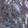 飛騨の冬景色 【野生のリス】