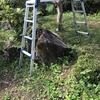 倒木のリスクを考えて庭木を伐採