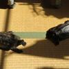 昨日は、お天気が良くて。。。亀も大喜び(^_-)-☆