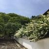 「こもりくの初瀬」宿命的な長谷寺の地形と信仰