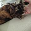 【猫ブログ】タイの猫の様子