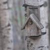 巣作りシーズンまっさかり