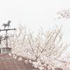 『散る桜 残る桜も…』の良寛和尚の辞世の句から考える日常を楽しむ視点の切り替え方。『ツバキ文具店(最終話)』