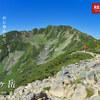 【南アルプス】仙丈ヶ岳、雷鳥と高山植物が躍る女王の山を歩く日帰り登山の旅
