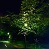 2019年05月06日クソ散歩 ~またラティアス~