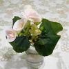 昨年末に折れたベゴニアが、新しい花をつけました!!