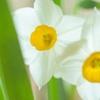3月21日より春分。昼と夜がほぼ同じとなり、自然の表情が豊かさを増す頃です。
