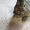 うさぎの脚フェチ 短足がタマラナイ!