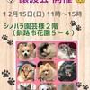 「12/15 譲渡会のお知らせ」のお知らせ