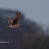 2019年12月21日の鳥撮り-群馬県