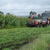 デントコーンの収穫