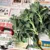 スティックセニョール(茎ブロッコリー)最後の収穫