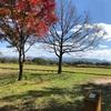 岡山県の蒜山高原キャンプ場へ行ったのでレビュー
