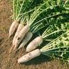 2月の食の歳時記:大根と豚バラのポン酒鍋