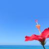 【8月】沖縄旅行まとめ。過去5年間の天気(雨の日)・台風・イベント・値段など