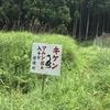 京都一周トレイル北山西部を走って打ちひしがれた話 <後編>