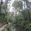 まるで別世界!自然あふれる等々力渓谷公園を散歩しよう【東京・世田谷】