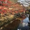 倉敷の紅葉と、イルミネーション続報